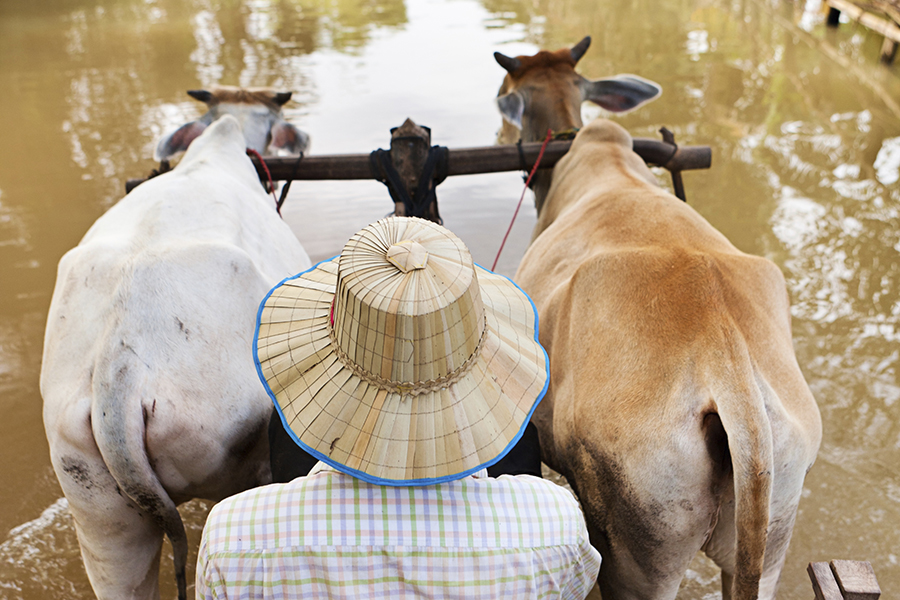 Explore rural life in Cambodia on a tailor-made trip