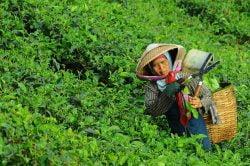 A woman in Doi Angkhang near Chiang Saen Thailand