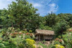 Chiang Mai nature landscape