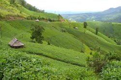 Mae Sariang hills