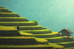 Vietnam holiday packages rice paddy