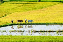 Rice fields (Mekong Delta region) - Essential Vietnam tour