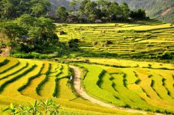 Rice terraces in Pu Luong - Vietnam Nature Tour with Hanoi Voyages