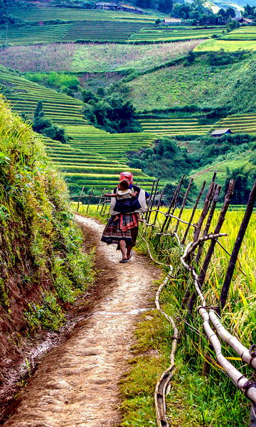 Tailor-made holidays sapa rice paddy