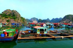 Viet Hai Float Fishing Village (Cat Ba) - Vietnam Nature Tour with Hanoi Voyages