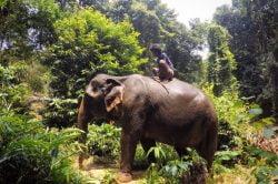Visit Ban Kwan Chang Elephant Park (Koh Chang) - Passion Thailand in 14 days