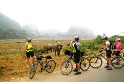 Tam Coc Rice Fields Cycling